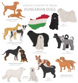 Fotografie Dogs by country of origin. Hungarian dog breeds. Shepherds, hunt