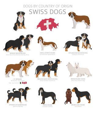 Dogs by country of origin. Swiss dog breeds. Shepherds, hunting,