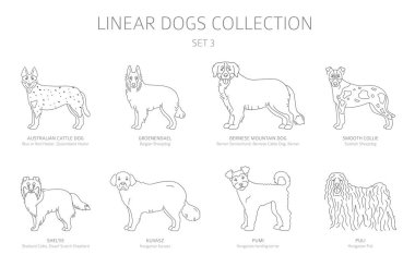 Simple line dogs collection isolated on white. Dog breeds. Flat