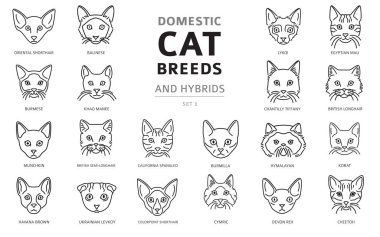 Domestic cat breeds and hybrids linear portraits collection isol