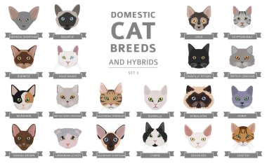 Domestic cat breeds and hybrids portraits collection isolated on