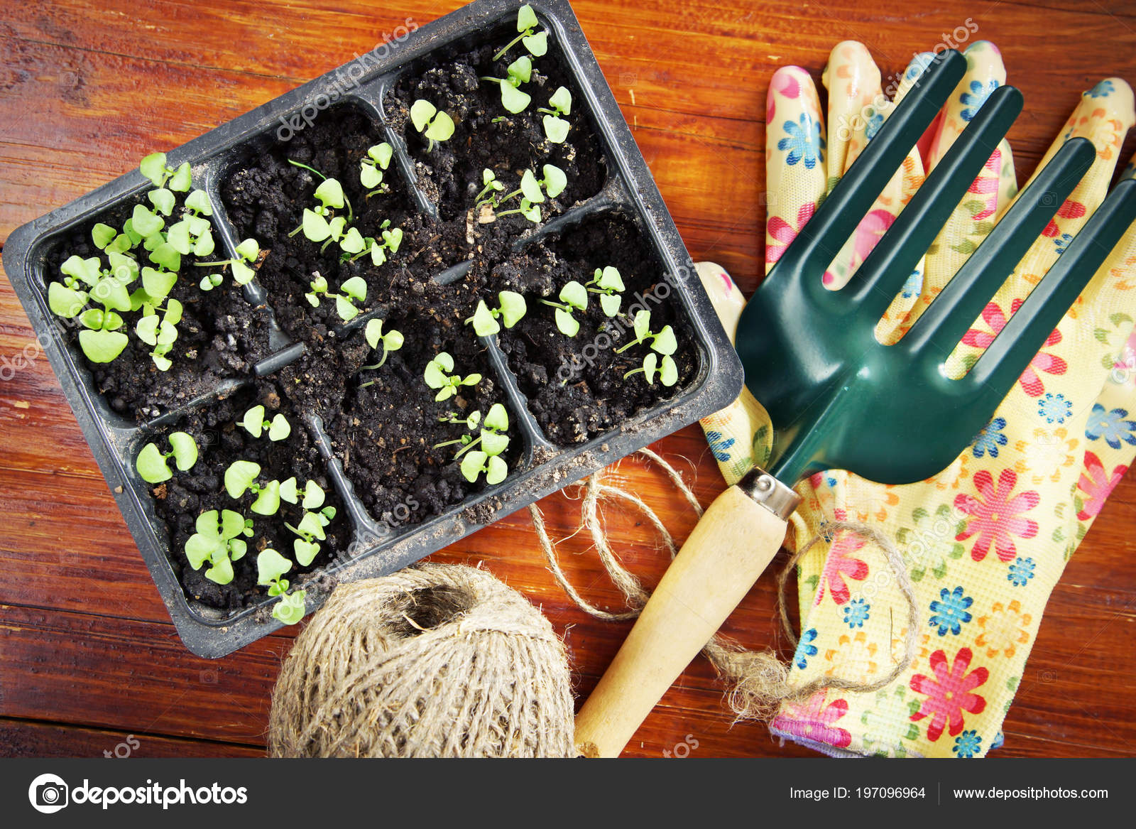 Composition Jardinage Avec Des Semis Des Outils Jardin ...