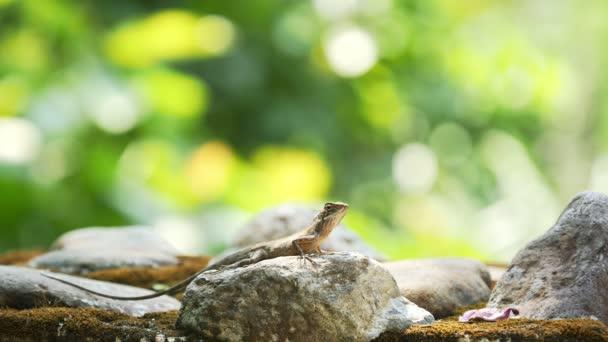 Chameleon na zem v přírodě.
