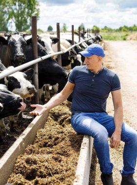 Farmer at farm with dairy cows