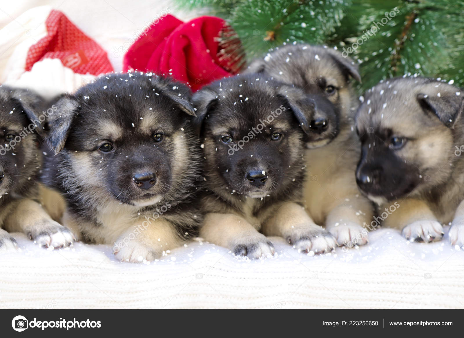 Cute Christmas Puppies.Christmas Group Cute Little Puppies Knitted Background