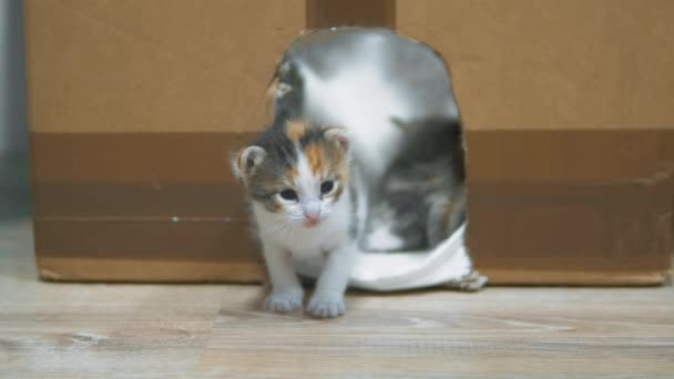 cat licks the kitten. Little kittens in the house and cardboard with the cat make the first steps. cute three-colored kitten. lifestyle concept pet small cat
