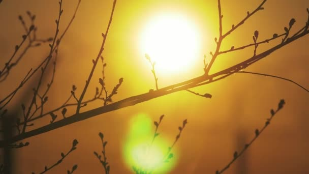 Image result for free images first sunray through bare branches