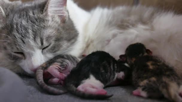 Gattini Gatto E Neonato Piccoli Gattini Succhiare Uno Stile Di Vita