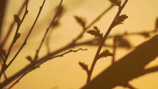 Siluety z větví stromu v úsvitu slunce Sunrise přírody. Siluety stromů Sunrise pozadí. siluety stromů v ranní náladu. siluety zimních holých větví