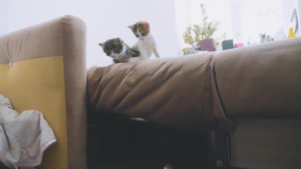 a macskák van kipróbálás-hoz kap ki a kanapén lassított video. cica játék koncepció két cica életmód és egy macska