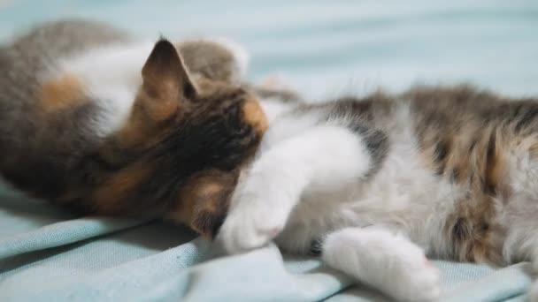 dvě bílé koťátko hrací spí kousnutí vzájemně. Dvě zábavné hravé zrzavé vlasy koťátka hrát s sebou. dvě malá koťata jsou spí domácí životní styl. malá kočka koťata koncept
