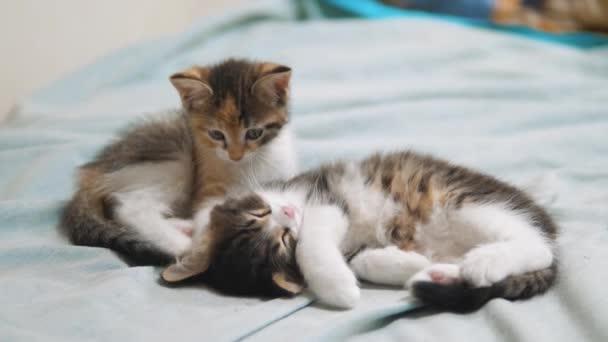dvě koťátka jsou spí. dvě malá koťata jsou spí domácí zvířata. malá kočka koťata koncept životní styl