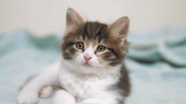 kleine flauschige süße lustige Kätzchen Porträt drinnen. niedliche Kätzchen ein wenig. Kätzchen Katze Konzept Lebensstil