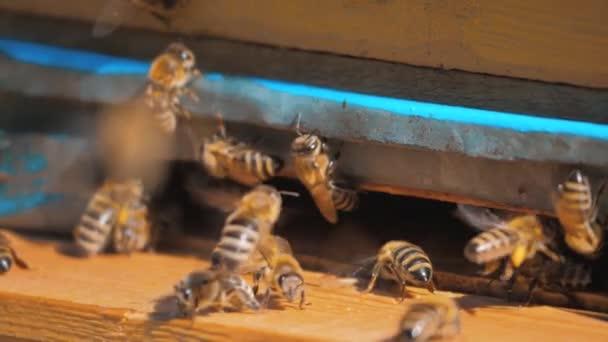 zpomalené video včelařství. roj včel letí do podregistru sbírat pyl medvěd med životního stylu. včelařství koncept bee zemědělství. Včely medonosné rojení a létající kolem svého úlu
