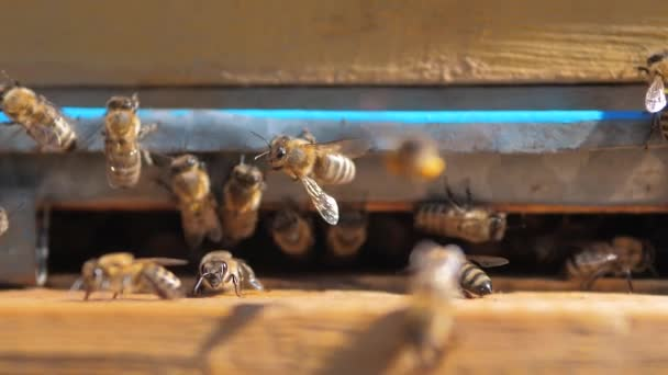 slow lifestyle motion video apiary. a swarm of bees flies into a hive collect the pollen bear honey. beekeeping concept bee agriculture. Honey bees swarming and flying around their beehive