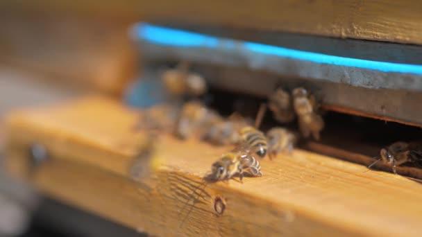 zpomalené video životní styl včelařství. roj včel letí do podregistru sbírat med medvěd pylu. včelařství koncept bee zemědělství. Včely medonosné rojení a létající kolem svého úlu