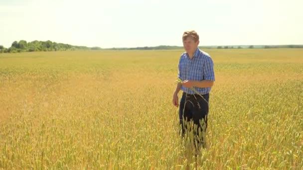 Starý farmář životní styl člověka prozkoumat studují v oblasti zemědělství muž konceptu. Pšeničné klíčky v rukou farmář. Farmář procházel úrody pšenice Kontrola pole. koncepce člověka zemědělství
