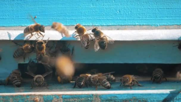 slow motion video apiary. a swarm of bees flies into a hive collect the pollen bear honey. beekeeping concept bee agriculture lifestyle. Honey bees swarming and flying around their beehive