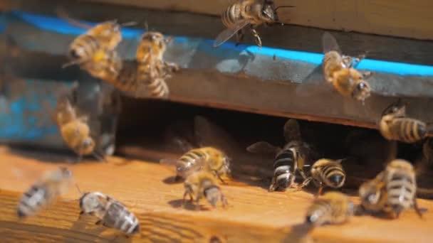 zpomalené video včelařství. roj včel letí do podregistru sbírat med životní styl medvěd pylu. včelařství koncept bee zemědělství. Včely medonosné rojení a létající kolem svého úlu