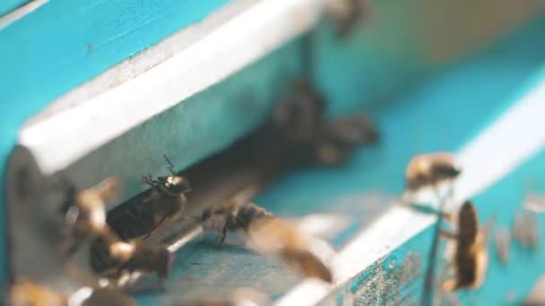 zpomalené video včelařství. roj včel letí do podregistru sbírat med medvěd pylu. včelařství koncept bee zemědělství. Rojení včel a životního stylu, létající kolem svého úlu