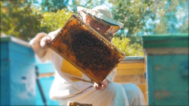 včelař drží plástev plná včel. Včelař kontrole plástev snímek na včelařství. Včelařství koncept zpomalené video. včelař drží plástev plná včel. Včelař životní styl