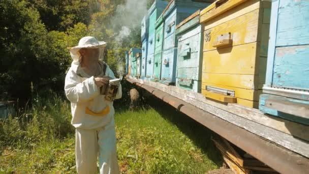 včelař pracuje ve včelařství včely létají roj multi barevné úlu zpomalené video. Bee výrobce včelaře člověka životní styl fungování zařízení kuřák kouřit dýmku pípátko Úly dřevěné odpuzující