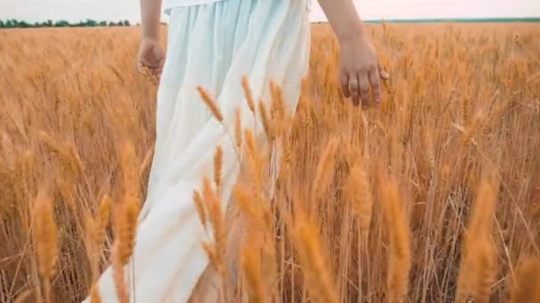 Plus Size Mode-Modell in Slow-Motion-Video Fuß auf Feld Weizen. Fette Frau auf Natur im Bereich Rasen Blumen Sommer. Landwirtschaft Übergewicht Frauenkörper. volle Mädchen Länge Porträt Natur Freiheit