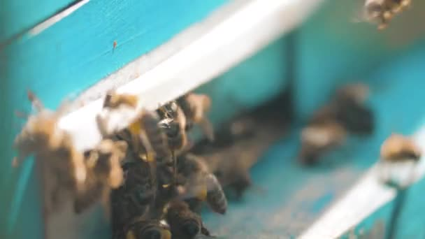 zpomalené video včelařství. roj včel letí do podregistru sbírat med medvěd pylu. včelařství koncept bee zemědělství. Včely medonosné rojení a létání životní styl kolem svého úlu