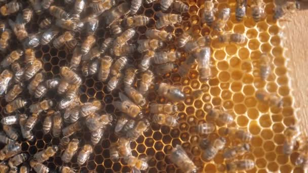 lot of bees honeycomb beekeeping background lifestyle moving work moving in the hive. beekeeping concept honey