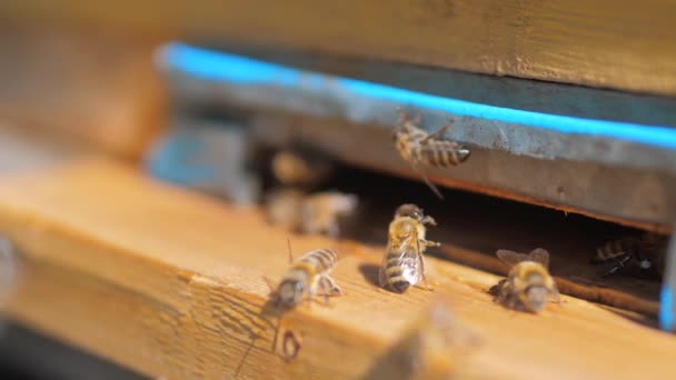 slow motion video apiary. a swarm of bees flies into lifestyle a hive collect the pollen bear honey. beekeeping concept bee agriculture. Honey bees swarming and flying around their beehive