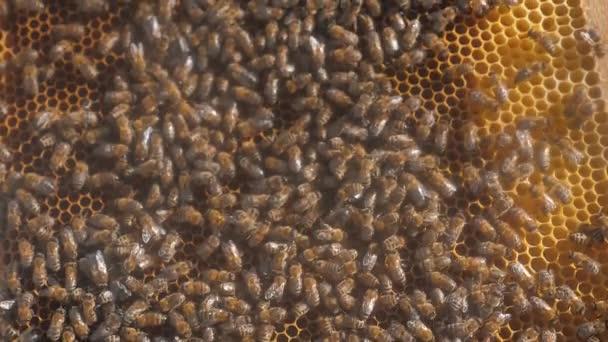 spousta pohybující se včelí plástev včelařství pozadí práce, pohybující se v úlu. životní styl včelařství koncept med