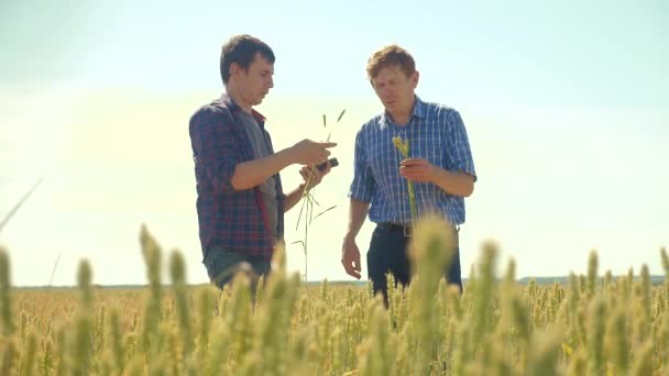 old two farmers summer handshake man on your smartphone Wheat Field running in the field wheat bread. slow motion video. farmer ecology concept. shake hands transaction agriculture worker working in