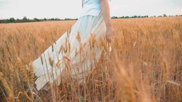 Plus size fashion model in slow motion video walking on field wheat. fat woman on nature in the field grass flowers summer. agriculture overweight female body. full girl length portrait nature