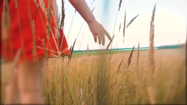 Plus Size Mode-Modell in Slow-Motion-video Fuß auf dem Rasen. Fette Frau auf Natur im Bereich Rasen Blumen Sommer, Übergewicht Frauenkörper. voll Lifestyle-Mädchen-Länge-Porträt-Natur-Konzept