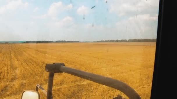 wheat grain into tractor bread trailer after harvest. field with wheat at harvest. lifestyle agriculture the wheat harvesting concept