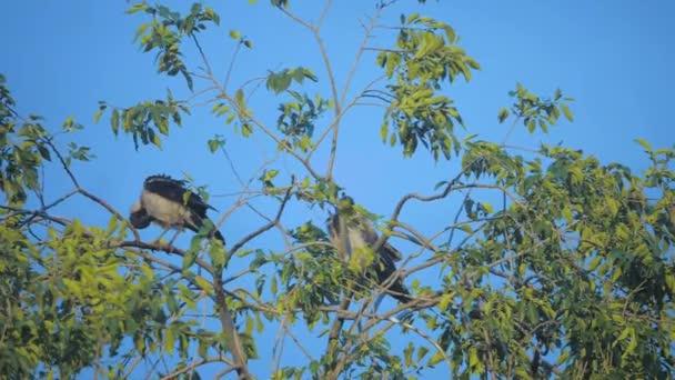 Vogelschwarm Raben im Sommer sitzt auf einem Baum. eine Herde Krähen. ein schwarzer Vogel. Grüner Lebensstil-Baum. Vögel krähen am Himmel. Krähen Vögel auf dem Baumkonzept