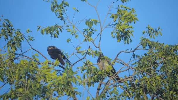 hejno ptáků havrani v létě sedí na stromě. hejno vran. Černý pták. Zelený strom. životní styl vrány na obloze siluety ptáků. vrány ptáci na stromě konceptu