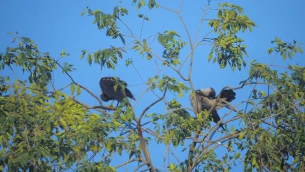 nyáj madarak hollók nyáron ül a fán. a nyáj varjak. A Fekete madár. zöld fa. madarak varjak a sky silhouette életmód. varjak madarak fa koncepciója