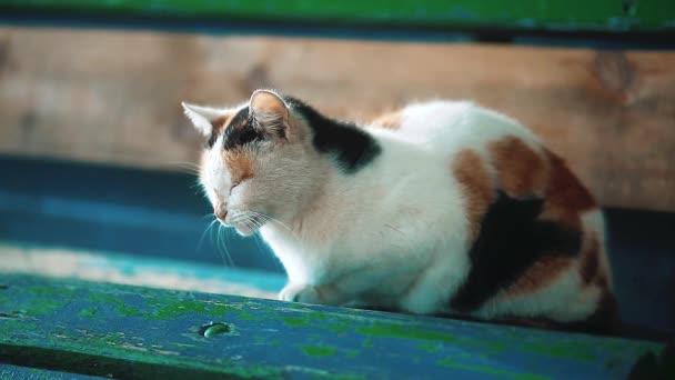 staré Toulavá trikolorní kočka sedí na lavičce. problém toulavých zvířat. kočka domácí životní styl