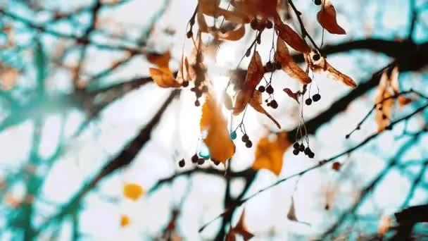 podzimní les sluneční paprsky přes větev stromu žluté listy krásné krajiny. parku maple tree listy slunné krásné světle stylu života
