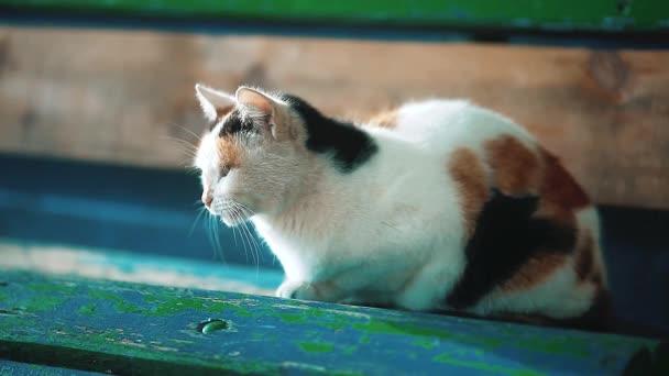 staré Toulavá trikolorní kočka sedí na lavičce. problém toulavých zvířat životního stylu. kočku