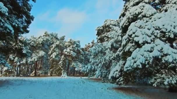 Krásná zimní krajina s západ slunce v lese. strom vánoční hnutí steadicam. Les v zimě pokryty sněhem. Zimní pozadí sněhu pokryta jedle v horách. Zimní