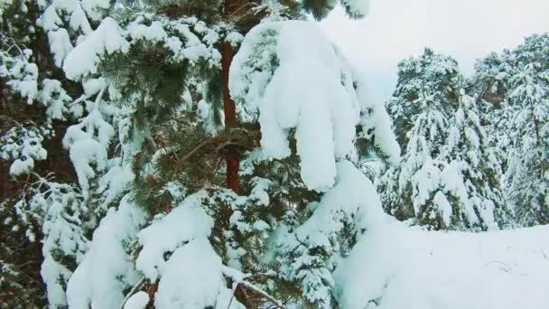 schöne Winterlandschaft mit Sonnenuntergang im Lebensstil des Waldes. Baumweihnacht-Bewegung Steadicam. Wald im Winter mit Schnee bedeckt. Winter Hintergrund der schneebedeckten Tannen in den Bergen