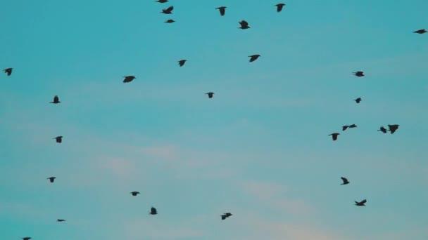 τεράστιο καυτό πουλί Χεντάι παιχνίδια σεξ για το Android