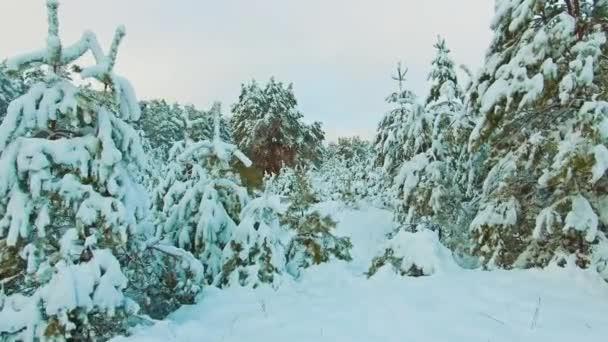 wunderschöne Winterlandschaft mit Sonnenuntergang im Wald. Baumweihnacht-Bewegung Steadicam. Wald im Winter mit Schnee bedeckt. Winter Hintergrund der schneebedeckten Tannen Lebensstil Bäume in den Bergen