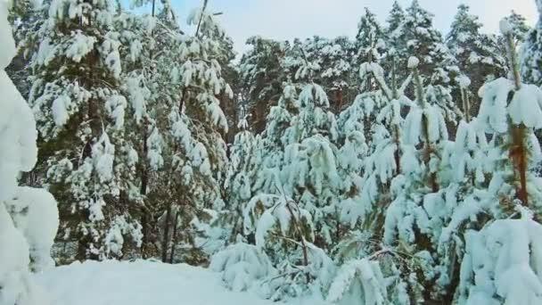 wunderschöne Winterlandschaft mit Sonnenuntergang im Wald. Baumweihnacht-Bewegung Steadicam. Wald im Winter mit Schnee bedeckt. Winter Hintergrund des Lebensstils schneebedeckte Tannen in den Bergen