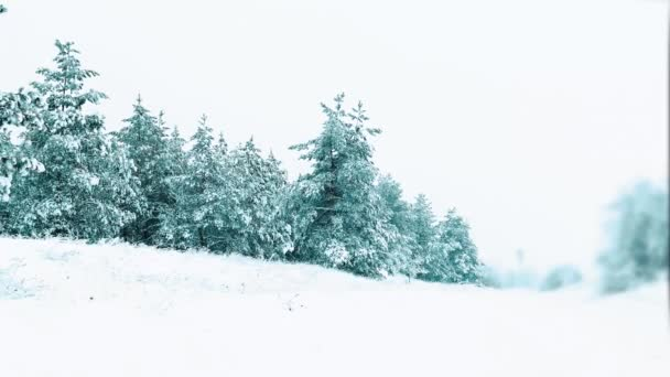 Vánoční strom. krásné zimní sněžení krajina v lese. strom vánoční hnutí steadicam. je to sněží sněhová bouře Les v zimě pokryty sněhem. Zimní pozadí sněhu zahrnuty jedle