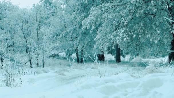 Weihnachtsbaum. Schneelandschaft im Winter im Wald. Baumweihnacht-Bewegung Steadicam. es schneit ein Schneesturm Wald im Winter von Schnee bedeckt. Winter Lifestyle Hintergrund des Schnees