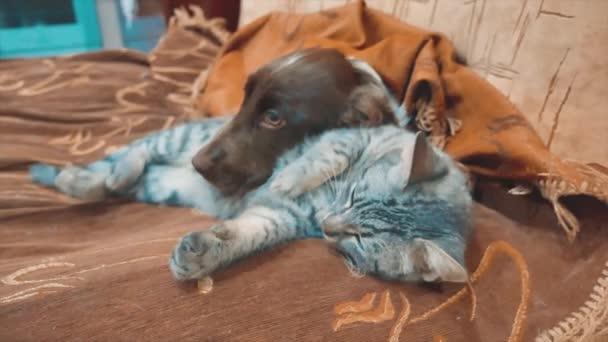 kočka a pes životního stylu jsou spolu spíme vtipné video. kočka a pes doma přátelství. Domácí zvířata přátelství a lásky kočka a pes