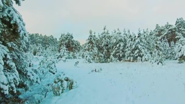 wunderschöne Winterlandschaft mit Sonnenuntergang im Wald. Baumweihnacht-Bewegung Steadicam. Wald im Winter mit Schnee bedeckt. Winter Hintergrund der schneebedeckten Tannen Lebensstil in den Bergen